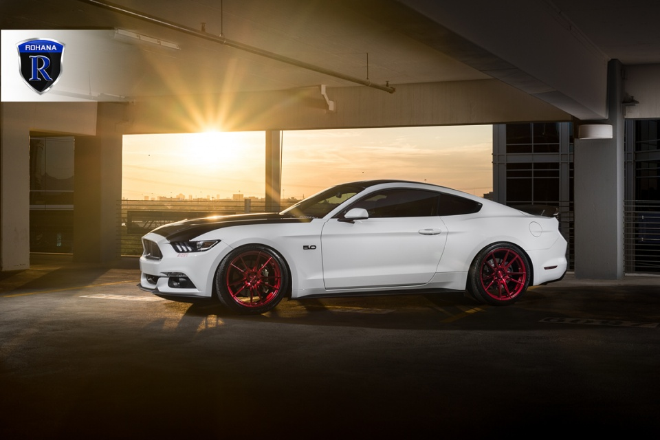 Mustang_rohana8